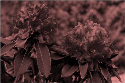 Imagen con un efecto de cambio de color a rojo