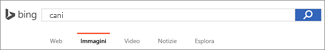 Query immessa nella casella di ricerca di Bing Immagini