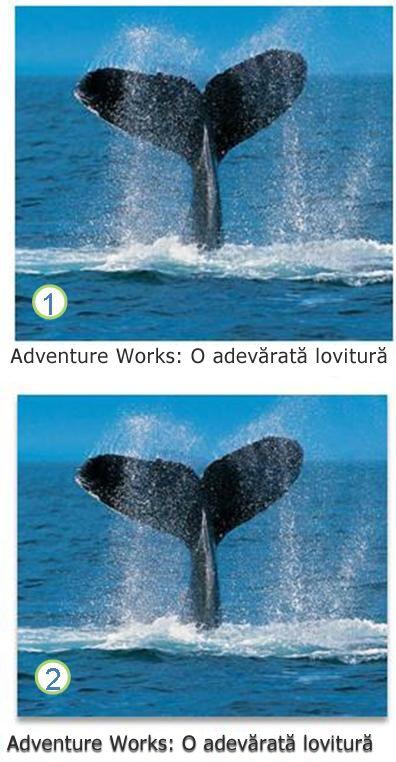 Efecte de text și imagini