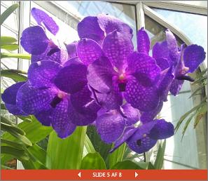 En integreret PowerPoint-præsentation af et blomstershow