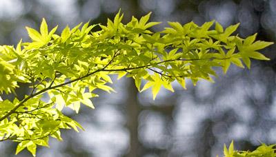 Bild von Blättern