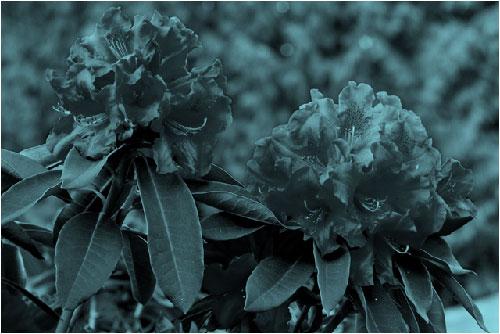 Slika s efektom ponovnog bojanja u modrozeleno