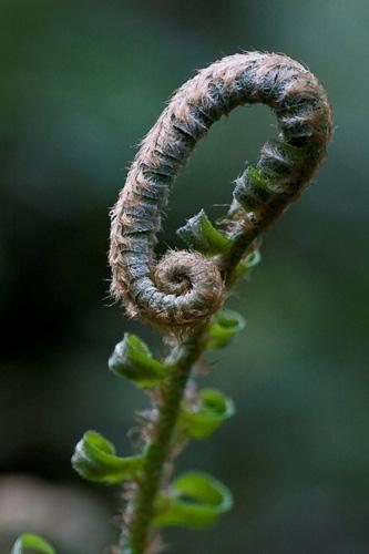 Immagine di una pianta