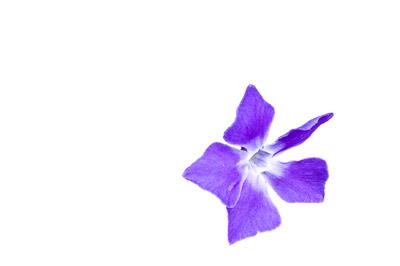 背景を削除した花