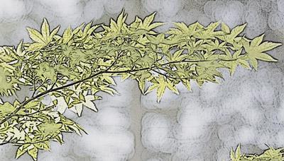 Folhas com efeito de fotocópia