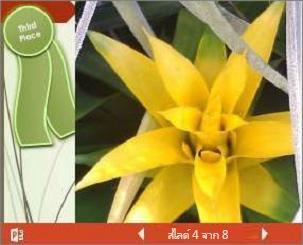 งานนำเสนอ PowerPoint ที่ฝังตัวของงานแสดงดอกไม้
