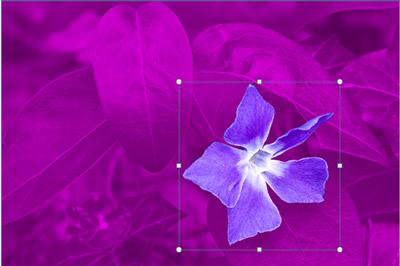 ดอกไม้ที่มีใบไม้เป็นพื้นหลัง