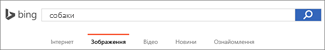 Запит, введений у поле пошуку зображень Bing
